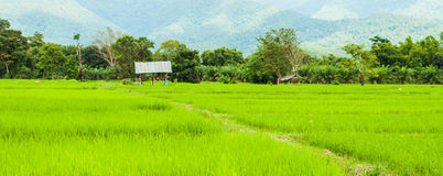 Paddy view. Image of rice paddy in rural Thailand Stock Photo