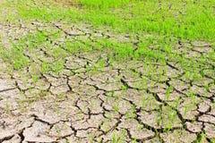 Paddyfeld rainless. Lizenzfreie Stockbilder