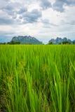 Paddyfeld in Thailand Lizenzfreie Stockfotografie