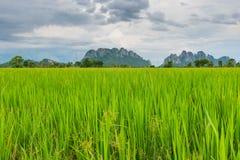 Paddyfeld in Thailand Lizenzfreies Stockfoto