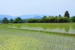 Paddyfelder in Gyeongju lizenzfreie stockfotos