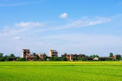 Paddyfield Royalty Free Stock Images