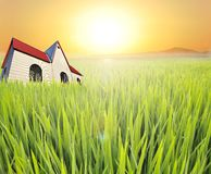 Paddyfield Stock Images