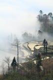 Paddyfield de la terraza de Hani en niebla Imagen de archivo