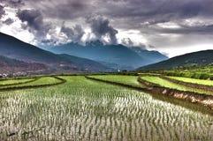 Paddyfields на горном склоне стоковые фотографии rf