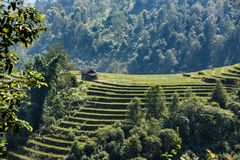 Paddys del riso nelle montagne Vietnam di Sapa Fotografie Stock Libere da Diritti