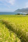 Paddyterrassenbauernhof nahe dem Meer Lizenzfreies Stockbild