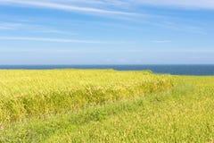 Paddyterrassenbauernhof nahe dem Meer Lizenzfreie Stockfotos