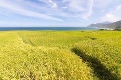 Paddyterrassenbauernhof nahe dem Meer Stockbilder
