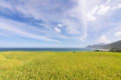 Paddyterrassenbauernhof nahe dem Meer Stockbild