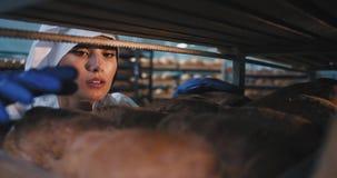 Padeiro atrativo da jovem mulher em uma cozinha da indústria de padaria arranja para dentro da prateleira industrial o pão cozido vídeos de arquivo