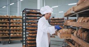 Padeiro maduro carismático da mulher em um uniforme branco bonito que verifica o pão fresco e o lugar na ordem em prateleiras video estoque
