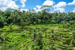 Padi大阳台,巴厘岛,印度尼西亚 免版税库存图片