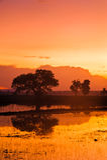 Padi Field At Dawn