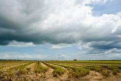 Padi Field cosechado, Sekinchan, Malasia Fotografía de archivo