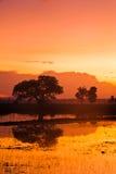 Padi Field at Dawn. Sunrise view of a padi field Royalty Free Stock Photography