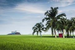 Padi Field. Green padi field in Sekinchan, Selangor Stock Photos