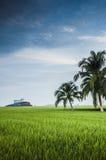 Padi Field. Green padi field in Sekinchan, Selangor Royalty Free Stock Photo