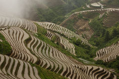 Padi Field a Jie lungo Fotografia Stock