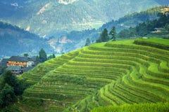 Padi Field a Jie lungo Fotografie Stock Libere da Diritti