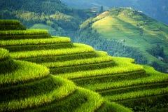 Padi Field a Jie lungo Fotografia Stock Libera da Diritti