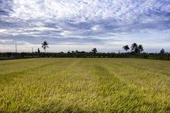 Padi Field Nakornpathom, Thailand Arkivbilder