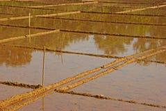 Padi Field Ready vuoto per piantare Fotografia Stock