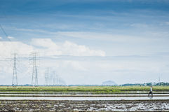 Padi field. Towers of power lines crossing the padi field royalty free stock image