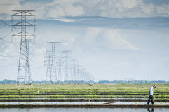 Padi field. Towers of power lines crossing the padi field royalty free stock photo