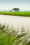 Padi Field and Water Canal. View of a padi field with mountain in the background and water canal on front stock image