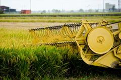 Padi Harvesting, Sekinchan, Malaysia Stock Images