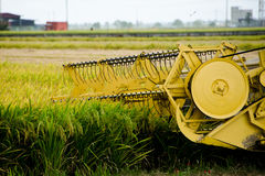 Padi Harvesting, Sekinchan, Malesia Immagini Stock