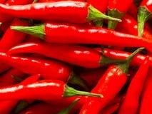 Padi rojo del chile Fotografía de archivo libre de regalías