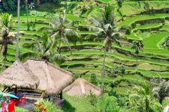 Padi Terrace, Bali, Indonesia - piantagione locale del terrazzo stratificato del riso nell'isola di Bali, Indonesia Fotografia Stock