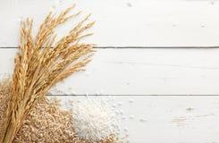 Padie en rijst Stock Fotografie