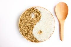 Padie en rijst in plante Stock Foto