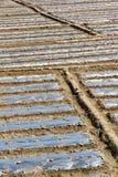 Padie-gebied rand Stock Foto