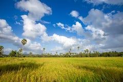 Padie op gebied, Thailand, Groen gebied Royalty-vrije Stock Afbeelding