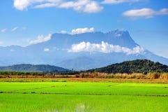 Padiegebied en MT Kinabalumening in Kota Belud, Sabah stock foto's