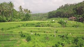 Padiepadieveld in Aziatisch plattelandssatellietbeeld Autoweg en groene rijstaanplanting op de mening van het dorpsgebied van hom stock videobeelden