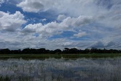 Padieveld Aziatische hemel-wolken Royalty-vrije Stock Foto