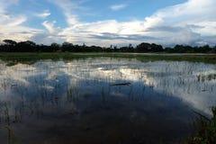 Padieveld Aziatische hemel-wolken Stock Foto's