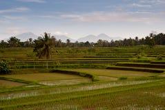 Padieveld in Bali met vulcanos op de achtergrond Stock Foto's