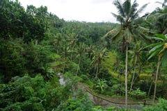 Padieveld Bali met wolken en palmen Stock Foto