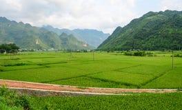 Padieveld bij de zonnige dag in Hoa Binh, Vietnam stock afbeelding