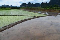 Padieveld in China Stock Foto