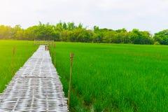 Padieveld en bamboe de brug voor reiziger neemt foto stock foto's