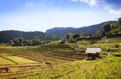 Padieveld en berg bij doi inthanon, Thailand Royalty-vrije Stock Foto's