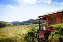 Padieveld en berg bij doi inthanon, Thailand Stock Afbeeldingen
