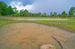 Padieveld en blauwe hemel van Kambodja stock foto